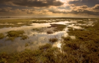 Saltmarsh at Wallasea Island. Credit: Ben Hall, rspb-images.com